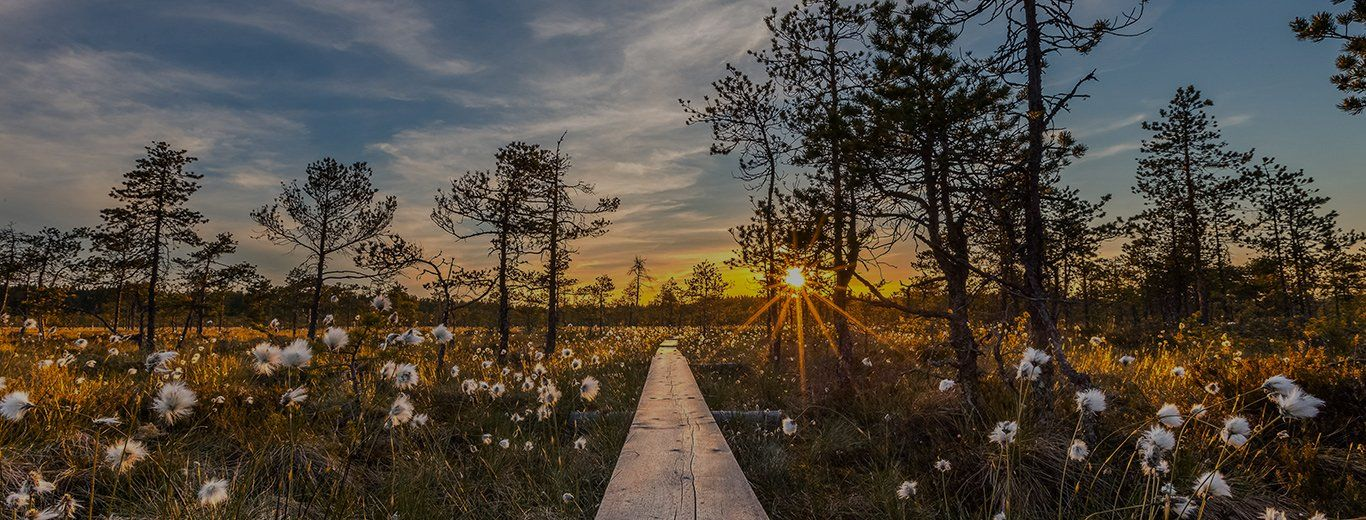 The Canon Get Inspired header image, showing a wooden walkway through flowering fields at dawn.